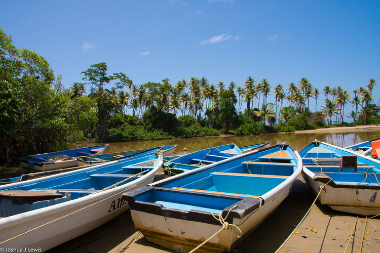 Landscape Boat Trees Coconut Trees Shore Beachphotography Blue Sky Trinidad And Tobago Caribbean Sea Riverside River View Mayaro Wide Beauty In Nature