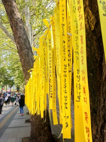 for the Sewol ferry Street Photography Cherish  Yellow Message