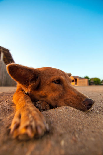 A lazy dog lying in the sand at a beach and relaxing. Adorable Blue Cabo De La Vela Coast Colombia Cute Dog Doggy Holiday La Guajira La Guajira Colombia Landscape Lifestyle Outdoors Paradise Relax Relaxation Sand Scenic Sky Summer Tourism Travel Tropical Vacation