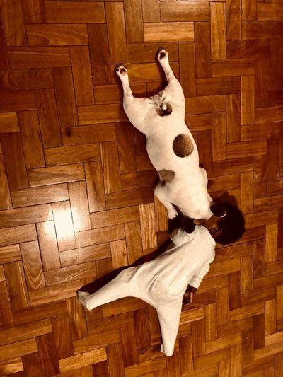 High angle view of dog lying on hardwood floor