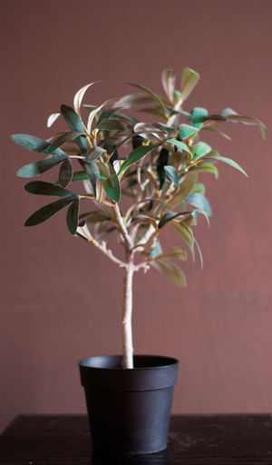 Nature Nature Photography Plant Plant Life Tree Beauty In Nature Bonsai Tree Flower Flower Head Freshness Growth Indoors  Leaf Mini Trees Minimalism Nature Plant Plastic Tree Plastic Trees Potted Plant Small Nature Table Vase