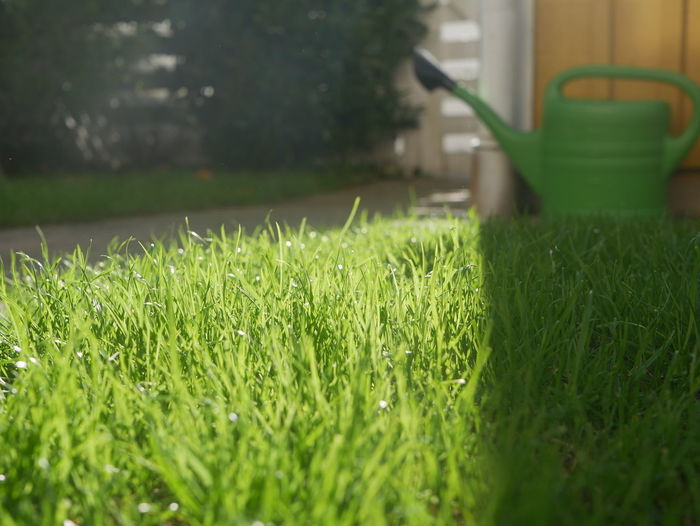 High angle view of grass in field