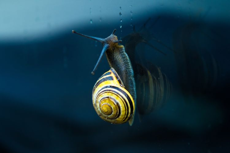 Close-up of snail on sea