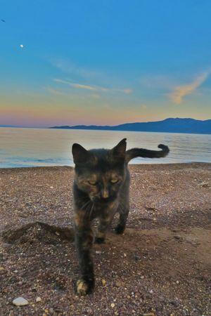 Cat Sea Seaside