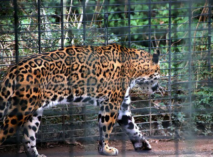Cat in zoo