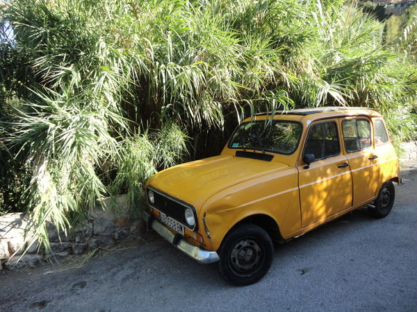 Renault 4 Car Day Land Vehicle Mode Of Transport Nature No People Outdoors Palm Tree Transportation Tree