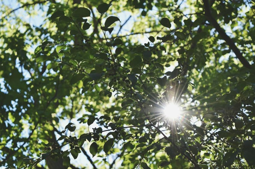 Sun Sun Flare Flare Sun Through The Trees Sunlight Leaves Nature Nature_collection Nature Photography Nature Lover Nikon D3300