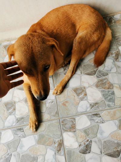 High angle view of dog hand on tiled floor