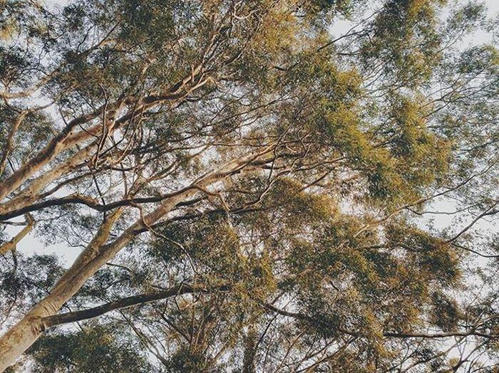 Árvores VSCO VSCOPH Vscocam Vscodaily Vscofotografia_ Afterligth Vscobrasil