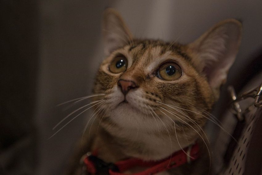 Cat Cats Cat Lovers Cat Eyes Eye Pet Pet Portraits