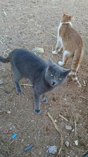 Cat Lovers Cats Of EyeEm Cat Eyes Cats 🐱 Algeria Adrar
