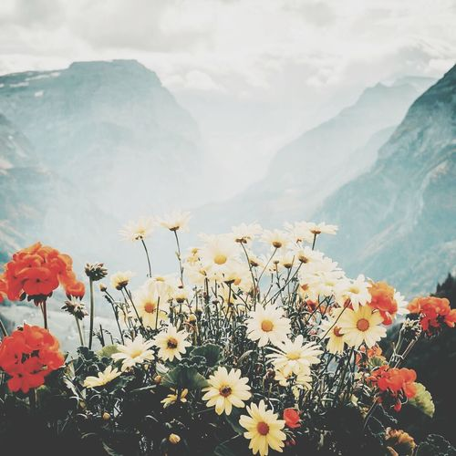 Flower Fragility Plant Nature Beauty In Nature Growth Blossom No People Close-up Freshness Outdoors Flower Head Sky Day Mountain