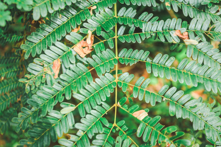 Leaves in the forest Green Backgrounds Beauty In Nature Branch Close-up Day Fern Focus On Foreground Freshness Full Frame Green Color Growth Leaf Leaves Nature One Person Outdoors Plant Plant Part Real People Tree