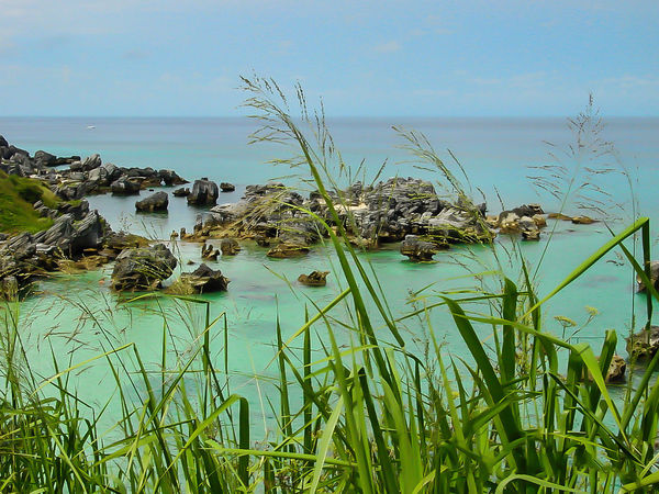 Beauty In Nature Bermuda Bermudaful Day Grass Green Color Growth Horizon Over Water Idyllic Nature No People Outdoors Palm Tree Plant Scenics Sea Sky Tranquil Scene Tranquility Tree Water