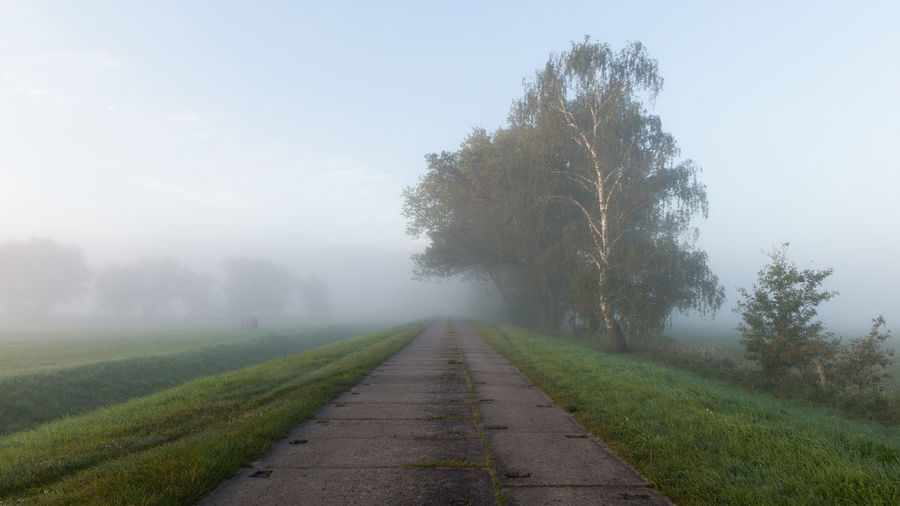Brandenburg Havelland Germany Naturpark Westhavelland Beauty In Nature Day Field Fog Grass Gülpe Landscape Nature No People Outdoors Pare Road Rural Scene Scenics Sky The Way Forward Tranquil Scene Tranquility Tree