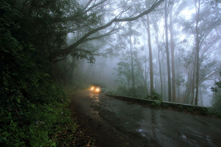 Vehicle on country road along trees