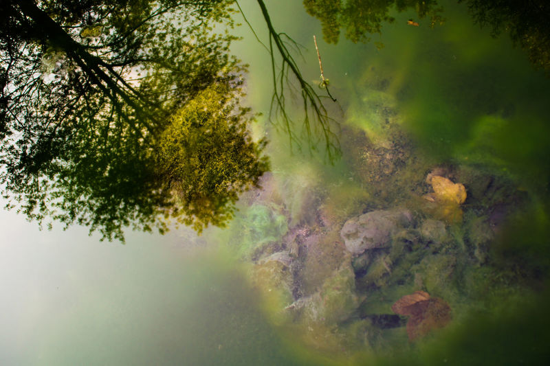 Reflecting Underground Beauty In Nature Countryside Day Dreamlike Green Green Color Growth Lake Nature No People Outdoors Reflection River Scenics Sea Tranquil Scene Tranquility Tree Underwater Water