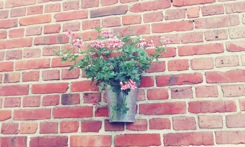 Artistic Flowers,Plants & Garden Flowers_collection Flower Photography Vintage Moments