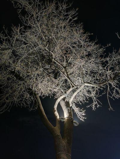 Black Background No People Sky Nightphotography Outdoors City Turkey Night Nature Tree Yalova Yalovasahili Beauty In Nature