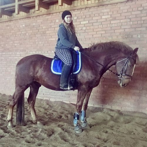Horse Hannoverian 4yo Gelding russia