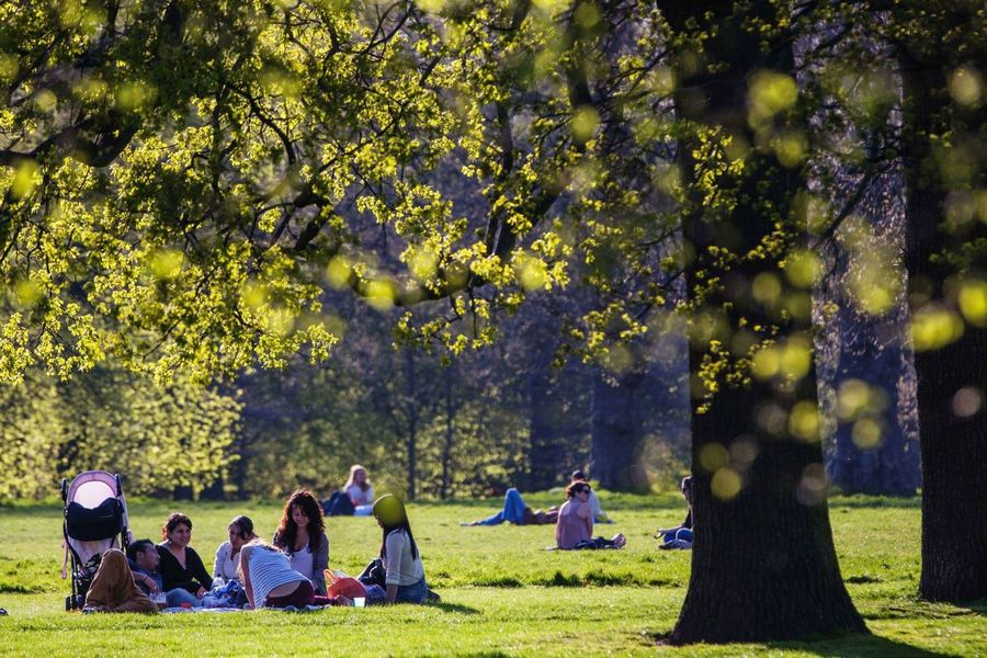 Hydepark Hyde Park Hyde Park, London London LONDON❤ London_only Park Trees Canon 5d Mark Lll Canon 70-200 F2.8 L IS-II