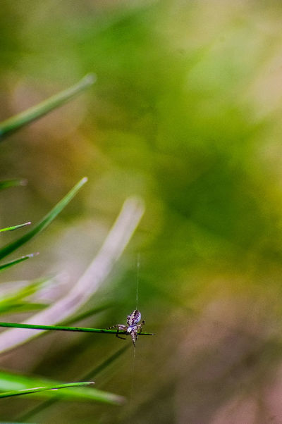 Macro Photography Manual Photography Manual Lens Poland Is Beautiful Spider Focus On Foreground Insect Nature No People One Animal Outdoors