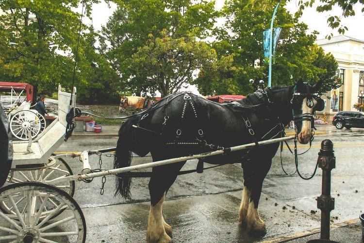 Service Animals Victoria Vancouver Island British Columbia