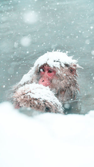 Snow Monkey Japan Onsen Snow Monkey Snow ❄ Animal Themes Animals In The Wild Close-up Cold Cold Temperature Day Japanese Macaque Landmark Macaque Mammal Monkey Motion Nagano Nature No People One Animal Snow Snowing Travel Destinations Water Winter Shades Of Winter