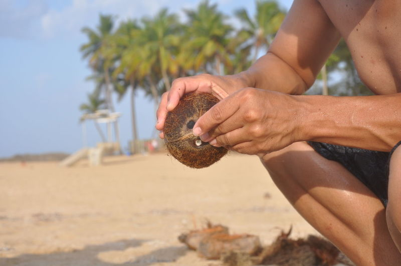 Basking In The Glow Beach Canna Soil Close-up Coconut Day Focus On Foreground Food Fresh Fruit Holding Human Body Part Human Hand Island Life La Isla Del Encanto Lifestyles Man Men Nature One Person Outdoors Puerto Rico PUERTO RICO 🇵🇷 Real Person Sand Tree