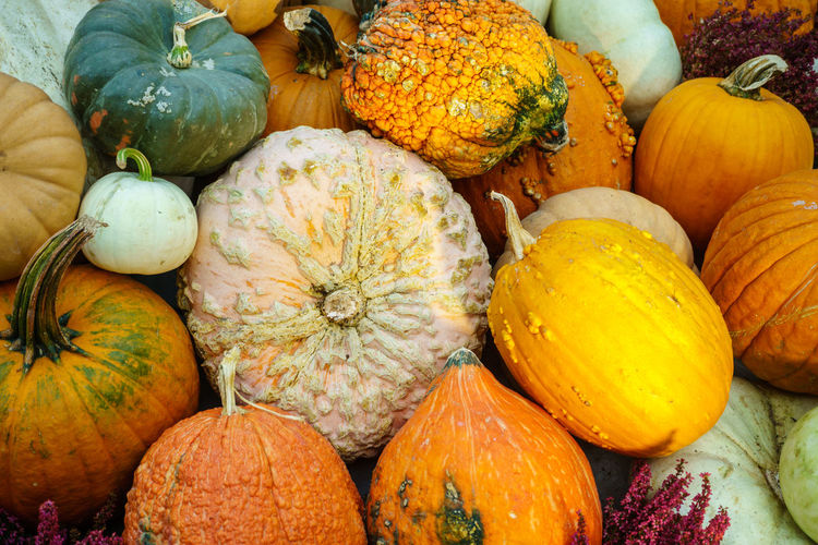 Various type of pumpkin Abundance Autumn Close-up Day Food Food And Drink For Sale Freshness Gourd Halloween Healthy Eating Heap Large Group Of Objects Market No People Orange Color Outdoors Pumpkin Rotten Squash - Vegetable Vegetable