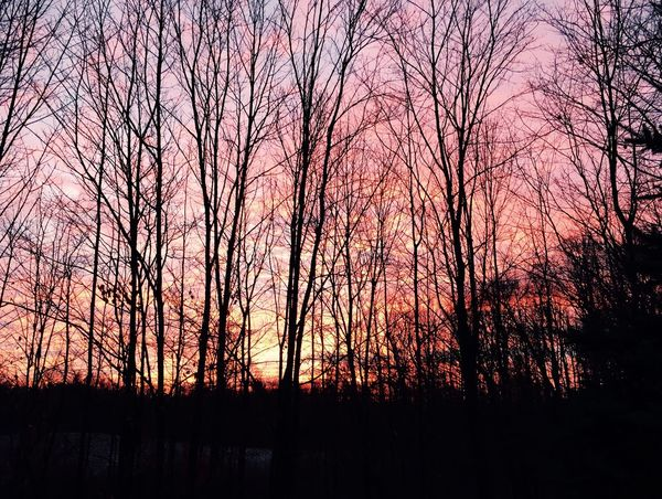 Winter Startoftheday Beautiful Day Sunrise Good Morning Trees And Sky Naturesbeauty