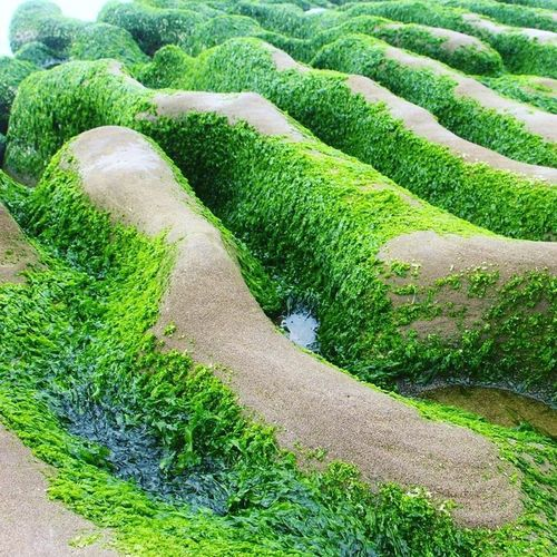 Green Color Nature Outdoors Beauty In Nature Grass Beauty In Nature Algae Growth Grass Taiwan Nature Green Color First Eyeem Photo