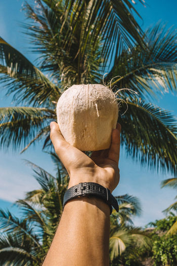 Cropped hand of man having coconut water against palm trees