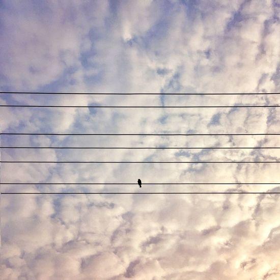 Birds Sky Clouds And Sky Nature China Sunset