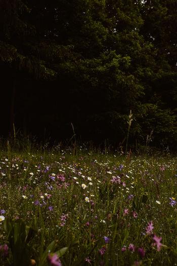 Flowering plants on field by trees