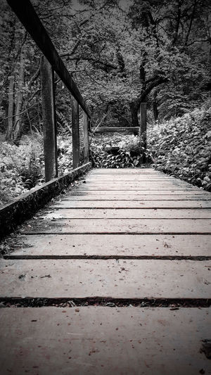 Wood bridge Eye4photography  Samsungphotography The Great Outdoors - 2017 EyeEm Awards Black And White Collection  Taking Photos Day Outdoors. Bridge Beauty In Nature Wood - Material WoodLand the way forward No People Shadow Nature
