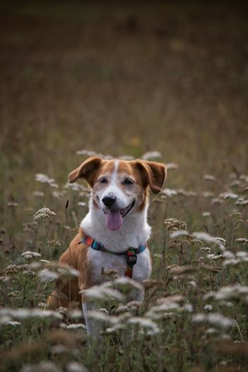 Dog amidst flowers on field