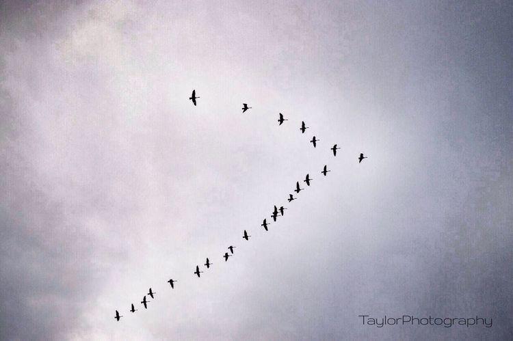 Flight.. Nikon Birds Taylorphotography