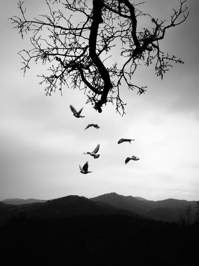 Silhouette birds flying in sky