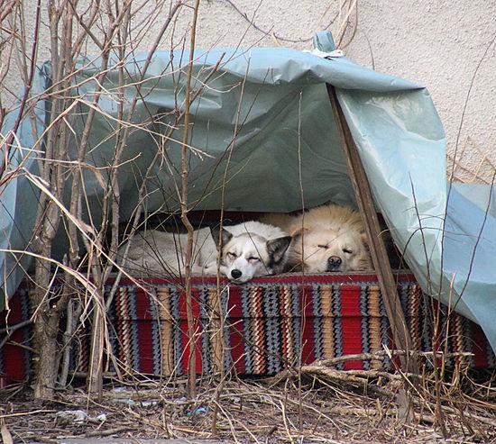 hotel 2 stars Animal Themes Dogs Domestic Animals Hotel Life Mammal Pet Pet Photography  Pets Stray Animal Stray Dog Street Urban