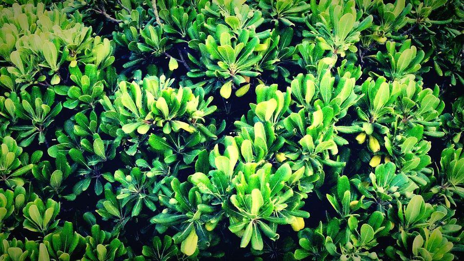 Fuji X-M1 Green Leaf Eyemnaturelover Leaf 🍂 Flowers,Plants & Garden Eyem Best Shots