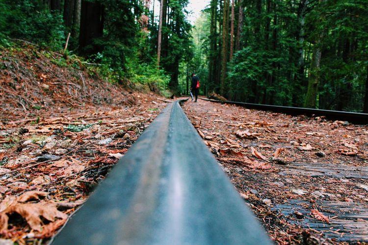 Santa Cruz California Bay Area Forest Forest Path Trees Train Train Tracks Trail Hiking