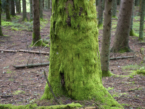 Beauty In Nature Forest Green Color Nature Outdoors Tree Tree Trunk Wood - Material