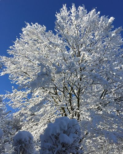 Winterwonderland.... Outside Winter Winter Wonderland Nature Winter Beauty In Nature Cold Temperature Snow Fragility