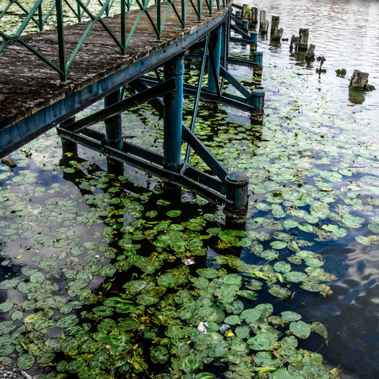 Blue Bridge Footbridge Reflection Architecture Beauty In Nature Bridge - Man Made Structure Close-up Day Flower Green Color High Angle View Lake Leaf Lily Pad Nature No People Outdoors Plant Tranquility Water