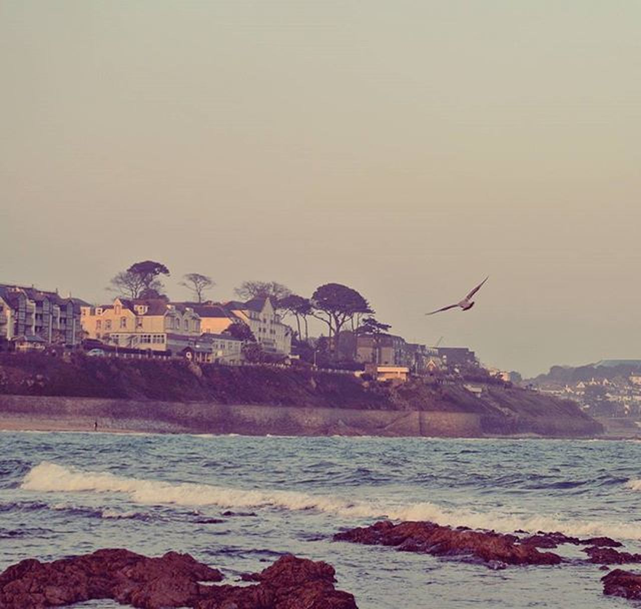 sea, water, animal themes, outdoors, no people, nature, bird, day, sky