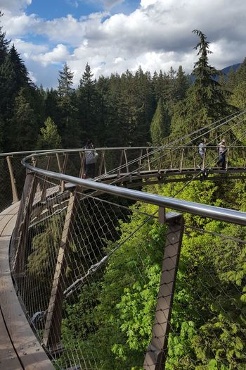 capillano suspension bridges Suspension Bridge Nature Forrest Canada British Columbia Vancouver Tree Sport Sky Cloud - Sky Park - Man Made Space