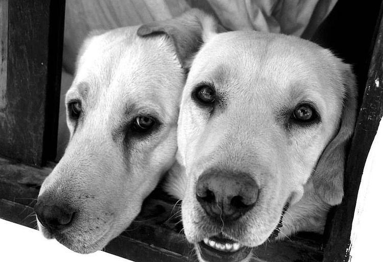Mis pequeños amigos... Blackandwhite Doglover