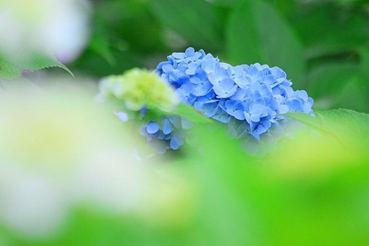 flower, nature, beauty in nature, plant, green color, fragility, leaf, blue, close-up, beauty, no people, freshness, outdoors, flower head, springtime, backgrounds, growth, day