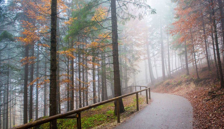 Autumn forest road, Fussen, Germany Tree Forest Plant Autumn Land Nature Fog WoodLand Beauty In Nature Environment Footpath Scenics - Nature Non-urban Scene Road Tree Trunk Day Trunk Landscape Morning No People Pine Tree Outdoors Pine Woodland Change Coniferous Tree
